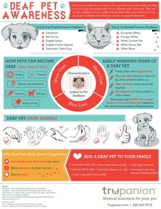 Deaf Pet Awareness Deaf Pets infographic - this fun poster is a great introduction to living with deaf dogs and cats.Deaf Pets infographic - this fun poster is a great introduction to living with deaf dogs and cats. Top Dog Breeds, Cat Breeds, Pet Care Tips, Dog Care, Pet Tips, Deaf Dog Training, Arthritis, Cat Health, Health Tips