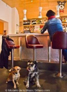 Home Burger Bar - San Marcos | SrPerro.com, la guía para animales urbanos.