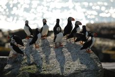 It's a Puffin Party! Better check the guest list...