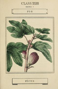 Elements of the science of botany v.3, figs.