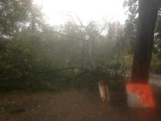 Prospect Park post #Sandy pics: (I walked our dog on this path every day)