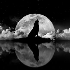 idea for tattoo - moon in background, Wolf on top, dog as reflection. entre chien et loup. Wolf Photos, Wolf Pictures, Wolf Tattoos, Wolf Tattoo Forearm, Celtic Tattoos, Animal Tattoos, Wolf Artwork, Wolf Spirit Animal, Howl At The Moon