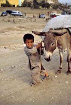 with donkey
