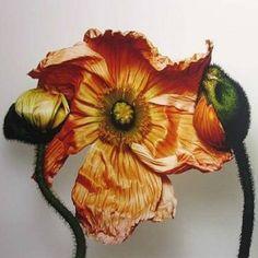 Irving Penn's Flowers | KAREN HARBIN | Karen Harbin