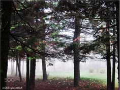 hidden in the fog - null Plants, Photos, Pictures, Plant, Planets