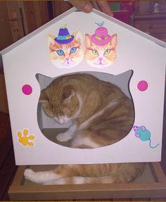 pré-test de notre cabane chat avec notre experte contrôle qualité