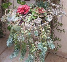 Suculentas#plantad#decoração