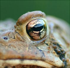 Good morning, Mr Toad