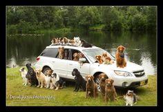 #dogs #outback #subaru @natewadesubaru @love