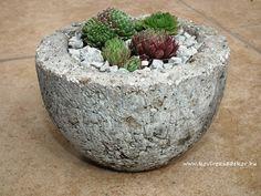 succulents in hypertufa pot Kövirózsa Dekor Serving Bowls, Succulents, Tableware, Decor, Dinnerware, Decoration, Tablewares, Succulent Plants, Decorating