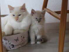 Mosca & Merlin
