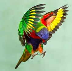 Pretty Birds, Beautiful Birds, Bird Pictures, Animal Pictures, Australian Parrots, Happy Week End, All Gods Creatures, Colorful Birds, Funny Animal Pictures