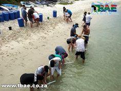 Graylink Biz Technology Beach Day Team Building Langebaan
