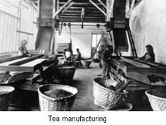 tea manufacturing process, old factory