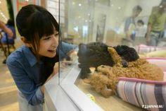 Wanna have these doggies as pet in Aeon! #aeon #shoppingmall #japankuru #japan #cooljapan #shopping #chiba #makuhari