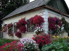 Роза – самый хороший вдохновитель. Своим появлением она вносит в дом энергию деятельности.