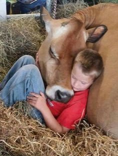 Young farm boy snuggling & snoozing in the hay with his Jersey cow. Cute Funny Animals, Cute Baby Animals, Animals For Kids, Animals And Pets, Barn Animals, Beautiful Creatures, Animals Beautiful, Cute Kids, Cute Babies