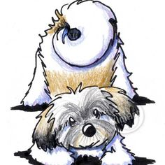 Original Drawing Playful Havanese Dog Breed ACEO Art on Etsy, $40.00
