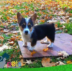 Feliz inicio de semana 🌞  #PetsWorldMagazine #RevistaDeMascotas #Panama #Mascotas #MascotasPanama #MascotasPty #PetsMagazine #MascotasAdorables #Perros #PerrosPty #PerrosPanama #Pets #PetsLovers #Dogs #DogLovers #DogOfTheDay #PicOfTheDay #Cute #SuperTiernos
