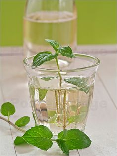Cocktail aus Sekt und Holunderblütensirup - Edith Albuschat