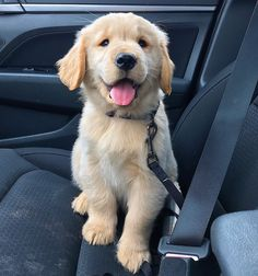 Pet Dogs, Dogs And Puppies, Dog Cat, Pets, Doggies, Super Cute Puppies, Cute Baby Dogs, Baby Animals Pictures, Cute Animal Pictures