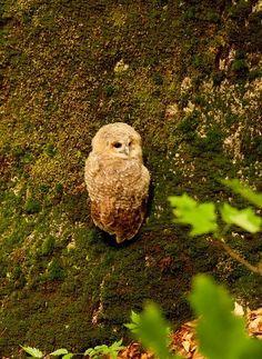 I ♥ owl