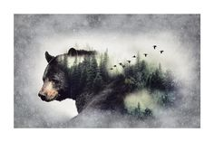 """Call Of The Wild Digital 27""""Panel Bear Forest from @fabricdotcom  From Hoffman Fabrics, this cotton print panel features a beautiful black bear entwined in a forest scene that makes it appear larger than life. The panel measures approximately 44"""" x 27"""" and is perfect for quilting, apparel and home decor accents. Colors include black, white, shades of green and grey, brown, light brown and tan."""