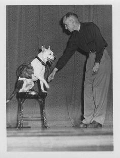 Buddy the Deaf Dog, 1950s