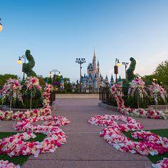 New Disney Wedding Location in the Magic Kingdom - the East Plaza Garden - Beautiful photos    Disney Fairy Tale Weddings and Honeymoon