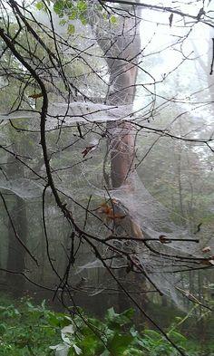 Creepy spider webs