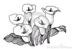 cala-lilly-floral-fondo-blanco-y-negro-del-ejemplo-59493275.jpg (400×274)