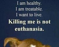 REMOVE RISA WEINSTOCK OF THE NYC AC&C, NYC DEPT. OF HEALTH AND DISBAND THE AC&C BOARD 7 days a week slaughter house! Healthy animals that are adoptable are destroyed  daily! PLS SIGN~