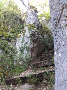 Une voie, avec ses escaliers aménagés et son échelle #sentier #randonnée pédestre#chemin #foret #GR #PR #marche #nature Trunks, Nature, Plants, Pathways, Paths, Stairs, Walking, Drift Wood, Naturaleza