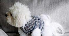 Tee itse lämmin koiran neule sukka- ja heijastinlangoista.