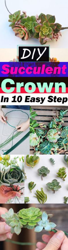 This DIY succulent crown is UNIQUE, making it is EASY and wearing it can make your special day more SPECIAL. And the best part is you can propagate the succulent leaves you picked after using it!