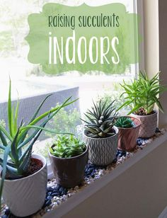 bliss bloom {blog} ~ a craft and lifestyle journal: Grow // Raising Succulents Indoors