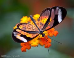 12 Beautiful Butterflies Bringing Sunshine To Your Day