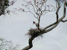 Bonito - MS - Pantanal