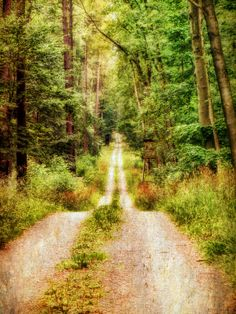 Forest road (no location given) by Claudia Hering on Flickr.
