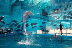 Dolphins show in Barcelona Zoo, Spain
