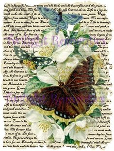 Pearl+Flower+Butterflies+Vintage+Art+Print+12x8+FREE+SHIPPING+shabby+chic