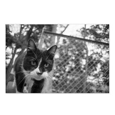 Ruby March 2015 #cat #blackandwhitephotography