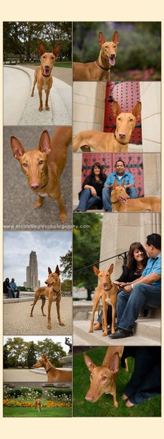 urban pet lifestyle photography pittsburgh - Nicole Begley Photography