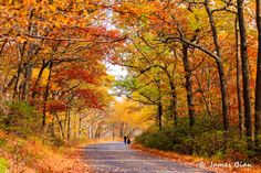 Autumn scene (Harriman, New York) by James Bian on cr. Landscape Photos, Landscape Paintings, Landscape Photography, Nature Photography, Fall Images, Fall Pictures, Late Autumn, Autumn Art, In Remembrance Of Me