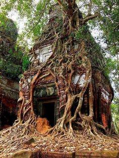 Koh Ker tower tree, Cambodia (by jumbokedama). - Nana chan - Koh Ker tower tree, Cambodia (by jumbokedama). In Kambodscha - Koh Ker, Abandoned Mansions, Abandoned Places, Abandoned Train, Haunted Places, Beautiful World, Beautiful Places, Beautiful Ruins, Beautiful Dream