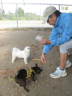 More canine friends coming around to enjoy some pip chips too. (Photo by Orchid)
