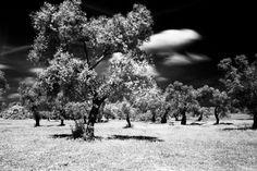Gli alberi sono gli strumenti a fiato del vento.  Marian Bogdala  #giovedifotografico