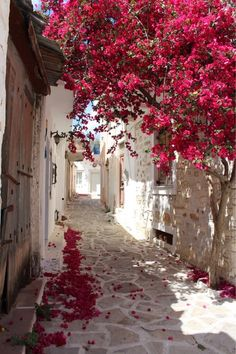 Imagen de travel, beautiful, and flowers