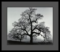 One Of The Premier Photographers Of The 20Th Century, Ansel Adams (1902-1984) Is Renowned For His Black And White Photographs Of America'S National Parks, Particularly The Mountainous American West.