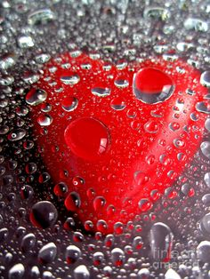 dew-drop-heart